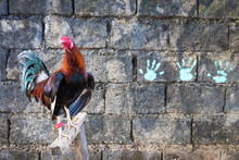 Rooster Perching On Wooden Post