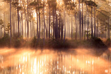 View Of Forest With Fog During Sunrise