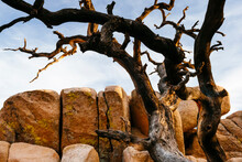View Of Bare Tree With Rocks I...