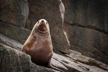 Sea Lion On Rock In Kenai Fjords National Park