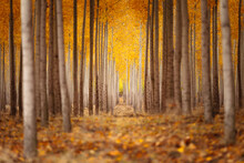 Scenic View Of Autumn Trees In...