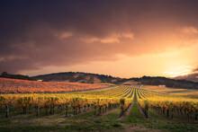 View Of Vineyard Against Sky D...