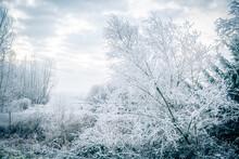 Frosty Jerry Sulina Park In Maple Ridge, British Columbia, Canada