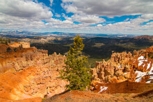 Scenic View Of Pine Tree With Bryce Canyon In Background