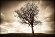 Bare Tree On Landscape Against Cloudy Sky