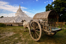 Ox Cart In Front Of Hsinbyume Pagoda, Mingun, Myanmar