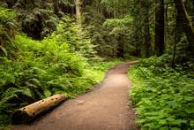 View Of Path In Purisima Creek Trail