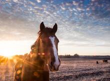 Horses Standing On Landscape I...