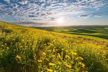 Scenic View Of Wildflowers Field During Sunrise