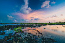 View Of Mangroves In Eleuthera...
