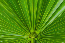 Close Up Of Tropical Plant In ...
