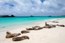 Galapagos Sea Lions Resting On Beach