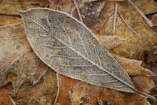 Close Up Of Frozen Leaf