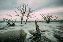 View Of Dead Trees On Beach
