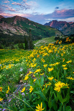 Scenic View Of Wildflowers Field With Mountains In Background