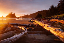 Scenic View Of Driftwood On La Push Beach During Sunset