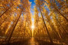 Scenic View Of Boardman Tree F...