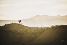 Man Riding Bicycle On Mountain...