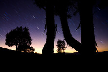 Star Trails With Silhouetted T...
