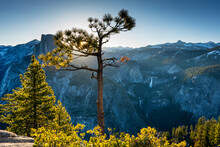 Scenic View Of Half Dome With Trees In Foreground During Sunrise