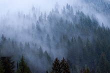 View Of Fog Covered Trees In B...