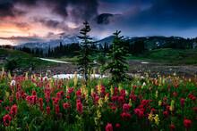 Mount Rainier Over Foggy Meadow Of Wildflowers