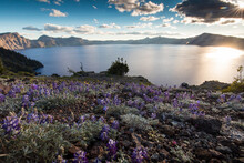 Scenic View Of Wildflowers By Crater Lake During Sunset