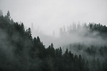 View Of Forest In Deschutes Na...