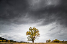 View Of Tree Against Stormy Clouds