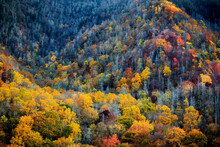 Scenic View Of Forest In Great Smoky Mountains National Park During Autumn