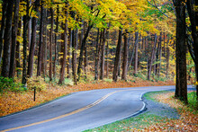 Road Passing Through Forest In...