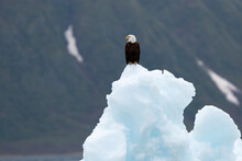 Eagle Perching On Glacier In Kenai Fjords National Park