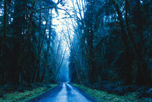 Empty Road Passing Through Forest In Olympic Peninsula