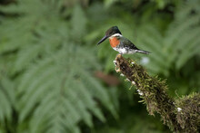 Close Up Of Green Kingfisher Perching On Branch