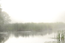 Scenic View Of Fog Over Reeds ...
