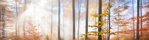 Colorful tall beech trees close-up Canvas Print