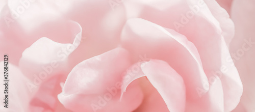 Soft focus, abstract floral background, pink rose flower petals Wallpaper Mural