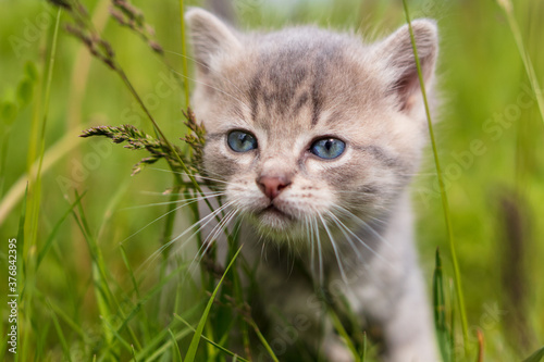 Portrait of a little kitten in green grass