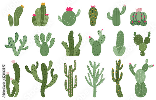 Vászonkép Cute cactus