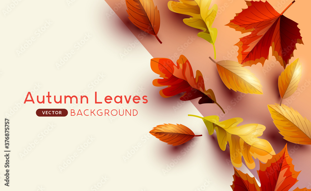 Fototapeta Autumn seasonal background frame with falling autumn leaves and copy space. Vector illustration