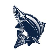 Sockeye Salmon Logo Illustration. Isolated On White Background.