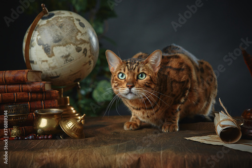 Fotomural Bengal cat, vintage items, books and manuscripts on the table on a dark background