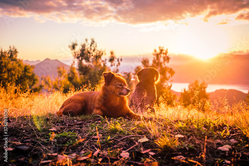 animal sunset Billede på lærred