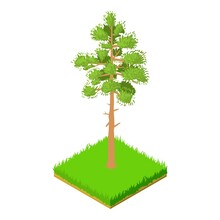 Pine Icon. Isometric Illustration Of Pine Vector Icon For Web