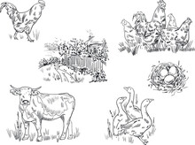 Sketch Drawing Of Animals On A Farm And A House In The Village. Cow, Geese, Nest With Eggs, Rooster And Chickens.