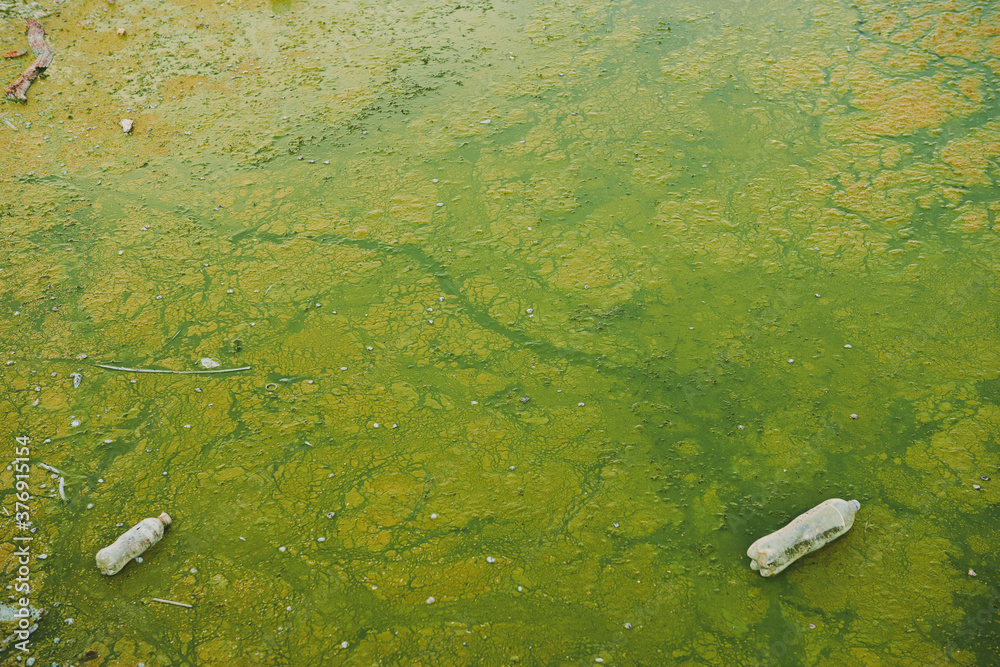 Fototapeta Green string algae and plastic rubbish in the pond. Environment pollution concept photo. Stinky water. Plastic bottles in the water. Copy space.