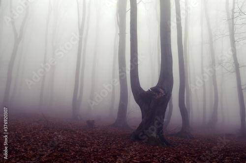 Obraz na plátně fog in the forest