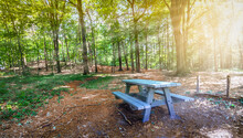 Wooden Picnic Table In The Forest And Sun Rays Through The Deciduous Trees On A Beautiful Summer Day.