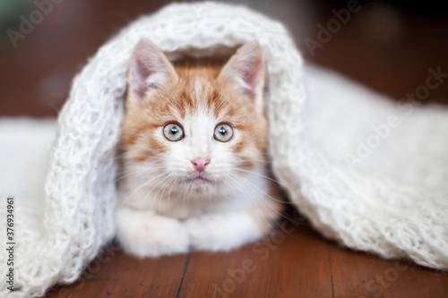 Kitten on a knitted blanket