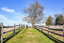 Path Between Split Rail Fences A Gate And Large Tree